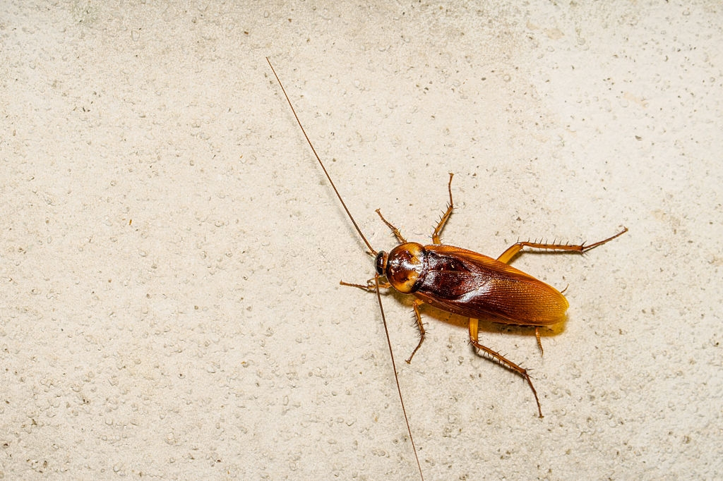 Cockroach Control, Pest Control in Southall, UB1, UB2. Call Now 020 8166 9746